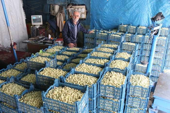 باغداران چشم انتظار بازار محلی
