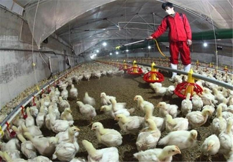 قرنطینه شدن یک مرغداری در چین درپی شیوع آنفلوآنزای مرغی
