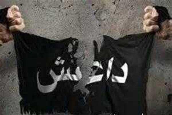 شاخه داعش در سینا با ابو ابراهیم القرشی بیعت کرد