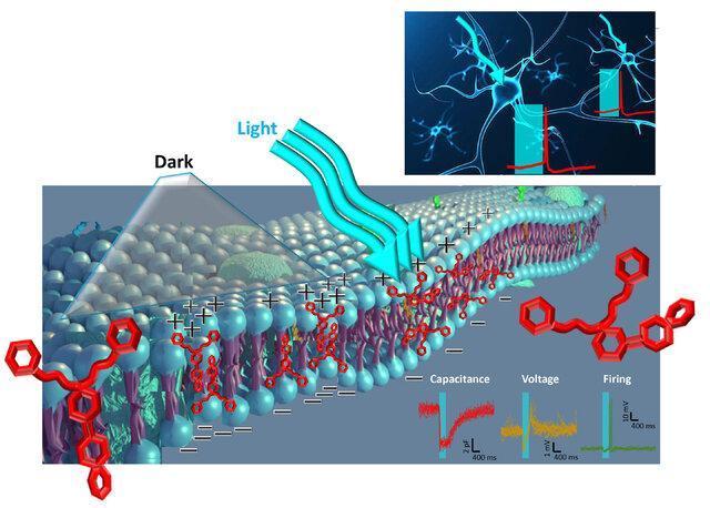ابداع یک ترکیب حساس به نور برای تعدیل فعالیت نورون ها