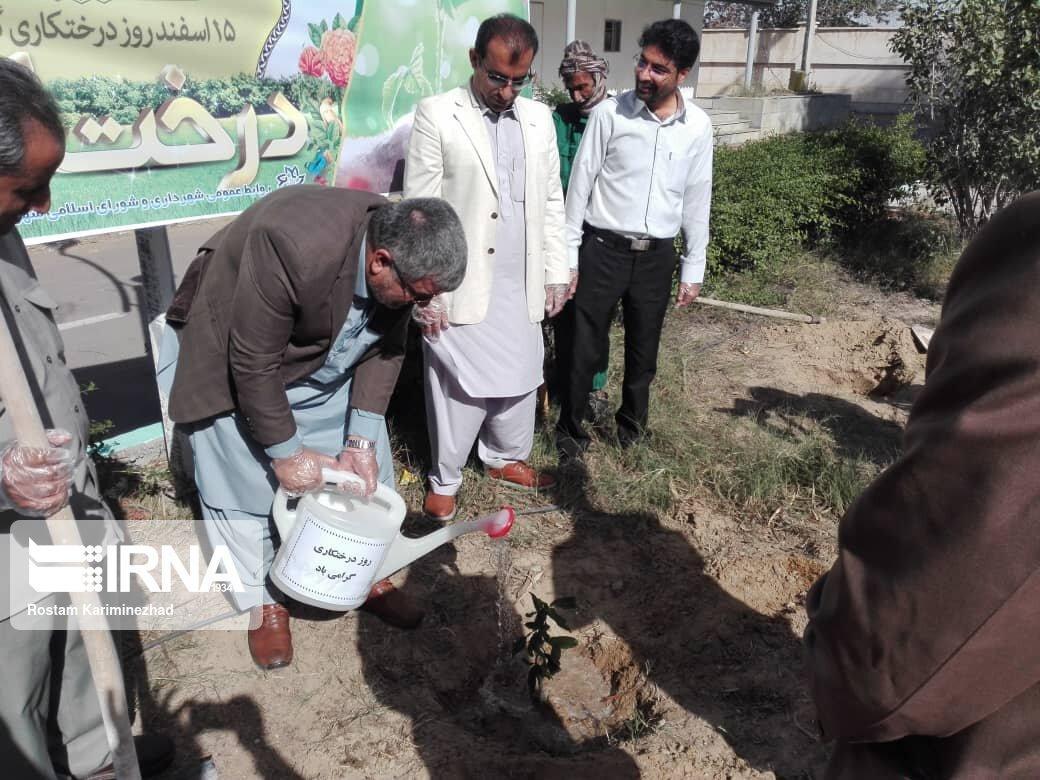 خبرنگاران کاشت درخت، سنتی نیک با مشارکت همگانی در چابهار