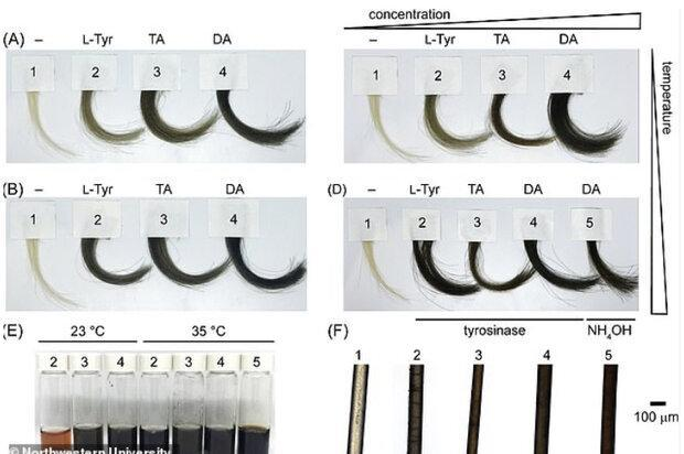 تولید رنگ مو با استفاده از آنزیم های قارچ