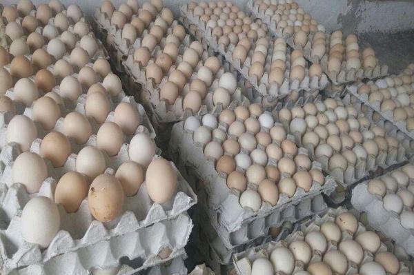 خبرنگاران 9 متخلف تامین تخم مرغ در خراسان جنوبی به تعزیرات حکومتی معرفی شدند