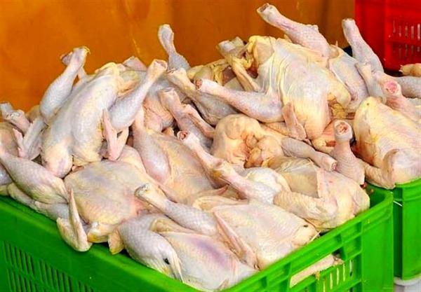 مرغداران: نگران کاهش نرخ مرغ به زیر قیمت مصوب هستیم خبرنگاران