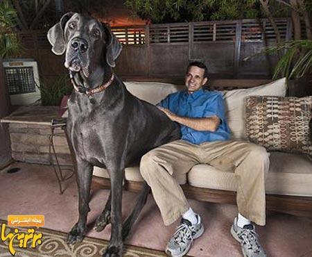عکس قد بلندترین سگ دنیا را ببینید